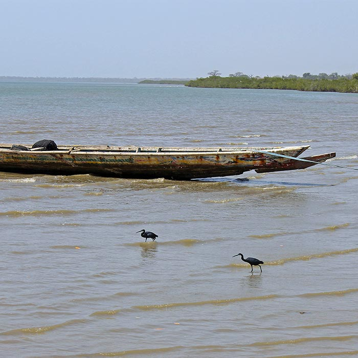 Birdwatching along the coast of the Gambia